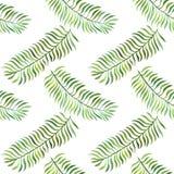 Bezszwowy wzór z akwarela paprociowymi liśćmi Zdjęcie Royalty Free