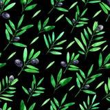 Bezszwowy wz?r z akwareli ga??zkami oliwnymi na czarnym tle szczotkarski w?giel drzewny rysunek rysuj?cy r?ki ilustracyjny ilustr ilustracji