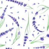 Bezszwowy wzór z akwareli lawendy kwiatami Obraz Royalty Free
