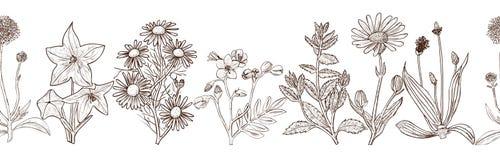 Bezszwowy wzór z atramentów ręki rysującymi leczniczymi ziele Obrazy Royalty Free