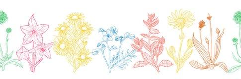 Bezszwowy wzór z atramentów ręki rysującymi leczniczymi ziele ilustracji