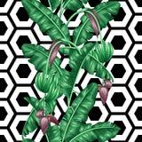 Bezszwowy wzór z bananowymi liśćmi Dekoracyjny wizerunek tropikalny ulistnienie, kwiaty i owoc, Tło robić ilustracji