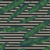 Bezszwowy wzór z bananowymi palmowymi liśćmi ręka patroszony wektor Zdjęcia Royalty Free