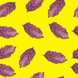 Bezszwowy wzór z basilu liściem Obraz Royalty Free