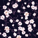 Bezszwowy wzór z białymi kwitnącymi gałąź, jabłoń o Zdjęcia Stock