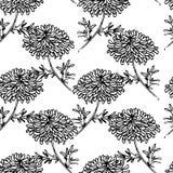 Bezszwowy wzór z chryzantema kwiatem ilustracji