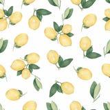 Bezszwowy wzór z cytrus owoc cytrynami na gałąź z zieleń liśćmi odizolowywającymi na białym tle ilustracji