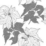 Bezszwowy wzór z czarny i biały poinsecją Obraz Royalty Free