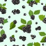 Bezszwowy wzór z czernicy i czarnego rodzynku jagodami również zwrócić corel ilustracji wektora ilustracji