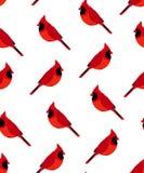 Bezszwowy wzór z czerwonym kardynałem Obrazy Stock