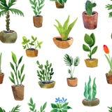 Bezszwowy wzór z domowymi roślinami Obrazy Stock
