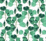 Bezszwowy wzór z eukaliptusem royalty ilustracja