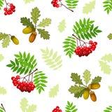 Bezszwowy wzór z gałąź, liśćmi i jagodami dębu i rowan, również zwrócić corel ilustracji wektora Fotografia Royalty Free