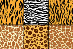 Bezszwowy wzór z gepard skórą Wektorowy tło Kolorowy zebry, tygrysa, lamparta i żyrafy egzotyczny zwierzęcy druk, royalty ilustracja