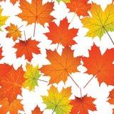 Bezszwowy wzór z kolorowymi liśćmi klonowymi Fotografia Royalty Free