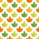 Bezszwowy wzór z kolorowymi liśćmi klonowymi Obrazy Royalty Free