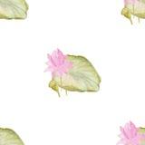 Bezszwowy wzór z kwiatami lotosowymi ilustracja wektor