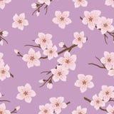 Bezszwowy wzór z kwitnąć gałąź wiśnia na purpurowym tle royalty ilustracja