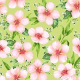 Bezszwowy wzór z kwitnąć jabłoni kwitnie na zielonym tle Elegancja rocznika niekończący się tekstura w akwareli ilustracja wektor