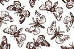 Bezszwowy wzór z noc motylami w retro stylu Biologiczny tło z insektami ręka patroszona Obrazy Stock