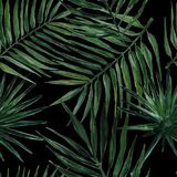 Bezszwowy wzór z palmą opuszcza na czarnym tle beak dekoracyjnego lataj?cego ilustracyjnego wizerunek sw?j papierowa kawa?ka dym? ilustracji