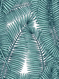 Bezszwowy wzór z palmowymi liśćmi w nakreślenie stylu Fotografia Stock