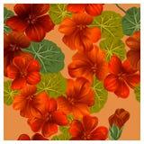 Bezszwowy wzór z pomarańczowymi nasturcja kwiatami Fotografia Royalty Free