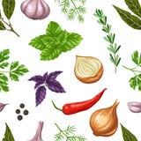 Bezszwowy wzór z różnorodnymi ziele i pikantność ilustracja wektor