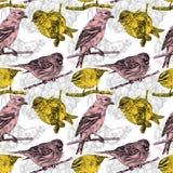 Bezszwowy wzór z różnymi ptakami i roślinami rysującymi ręką Fotografia Royalty Free