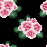 Bezszwowy wzór z różowym Afrykańskim fiołkiem, altówka kwitnie na czarnym tle Kwiecisty wzór z guaszem jeden uderzenie farba ilustracji