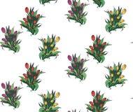 Bezszwowy wzór z różnymi bouquettes tulipany Obrazy Stock