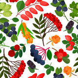 Bezszwowy wzór z różnymi jagodami Obraz Royalty Free