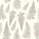 Bezszwowy wzór z ręka rysującymi paproć liśćmi Zdjęcia Stock