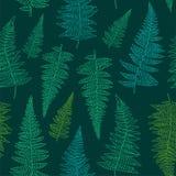 Bezszwowy wzór z ręka rysującymi paproć liśćmi Zdjęcie Stock