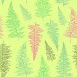 Bezszwowy wzór z ręka rysującymi paproć liśćmi Obrazy Royalty Free
