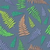 Bezszwowy wzór z ręka rysującymi paproć liśćmi Obraz Royalty Free