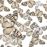 Bezszwowy wzór z rocznika bielu motylem ilustracji