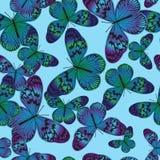 Bezszwowy wzór z rocznika modrozielonym motylem royalty ilustracja