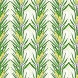 Bezszwowy wzór z rooibos rośliną Ziołowa herbata pakuje projekt royalty ilustracja