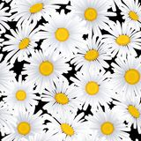 Bezszwowy wzór z rumiankiem kwitnie na błękitnym tle Obraz Royalty Free