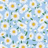 Bezszwowy wzór z rumiankiem kwitnie na błękitnym tle Zdjęcia Stock