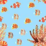 Bezszwowy wzór z rybami, clownfish, butterflyfishes akwarela ilustracja wektor