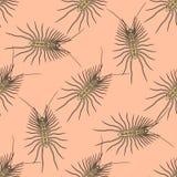 Bezszwowy wzór z Scutigera coleoptrata krocionogi pociągany ręcznie domowy centipede wektor Obraz Stock