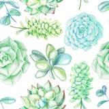 Bezszwowy wzór z sukulentami i roślinami Zdjęcie Royalty Free