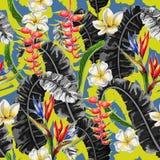 Bezszwowy wzór z tropikalnymi kwiatami Strelicia, plumeria i banana liścia ręka, rysujemy wektorową ilustrację