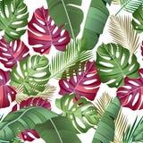 Bezszwowy wzór z tropikalnymi liśćmi: palmy, monstera, banan opuszczają, dżungla liścia wektoru wzoru bielu bezszwowy tło royalty ilustracja