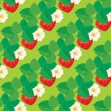 Bezszwowy wzór z truskawkami z kwiatami Obraz Stock