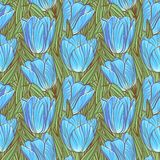 Bezszwowy wzór z tulipanami Zdjęcia Royalty Free