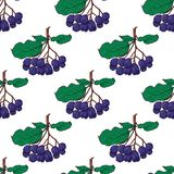 Bezszwowy wzór z wiązkami chokeberry Obrazy Royalty Free
