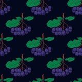 Bezszwowy wzór z wiązkami chokeberry Zdjęcie Royalty Free